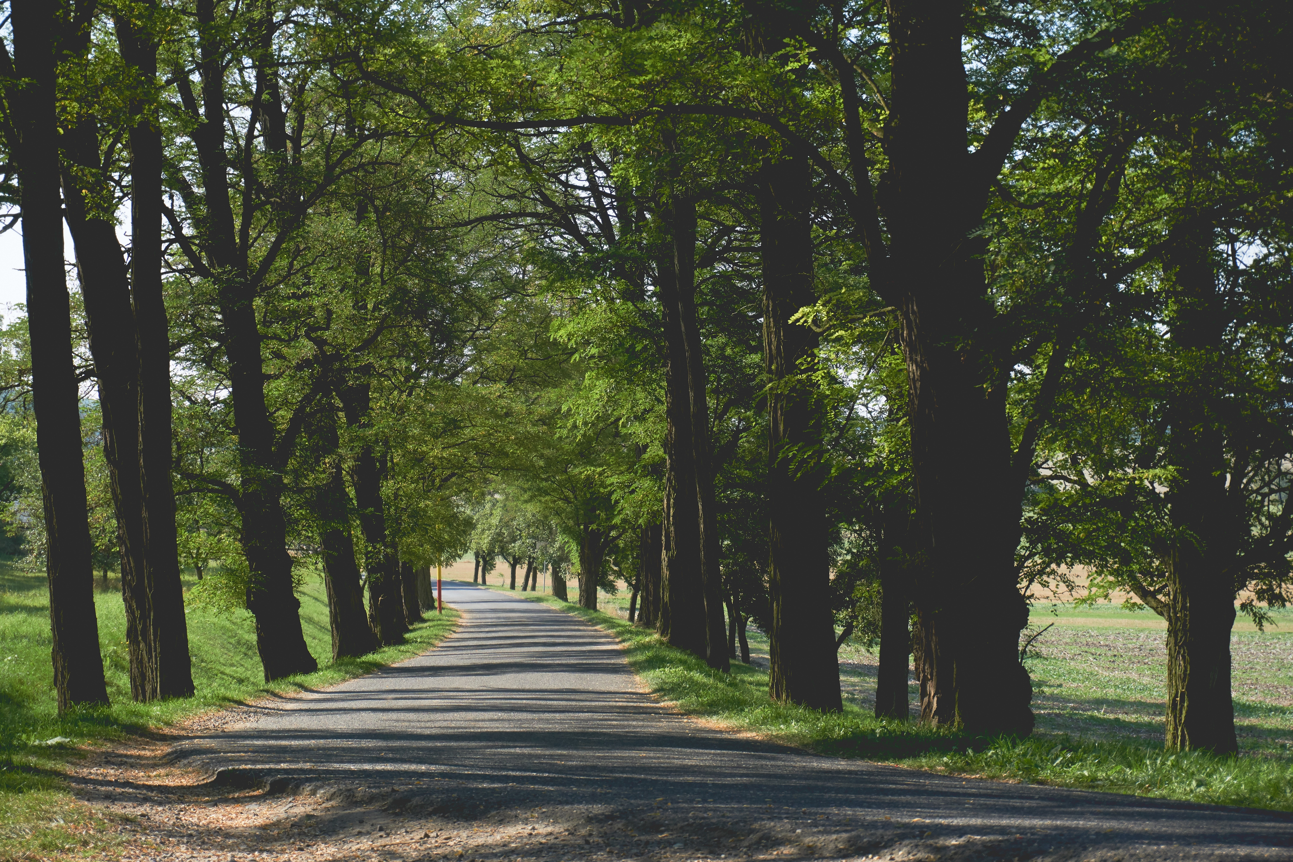 Walking trail near Midtown Park apartments